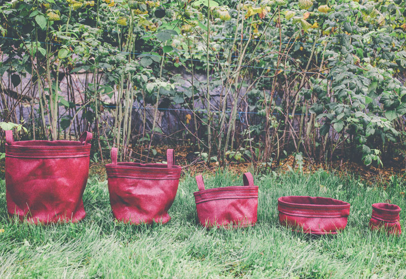 Evergreen Bags